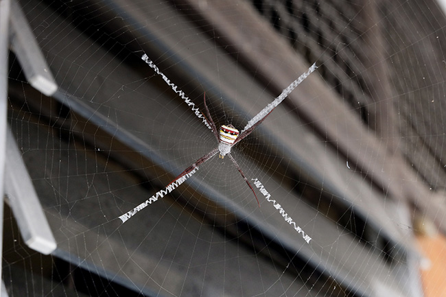 keep spiders off siding